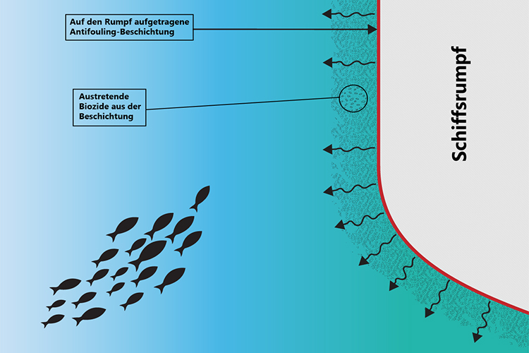 Grafik zur Veranschaulichung der Wirkweise von Biozid-haltigen Antifouling-Systemen.