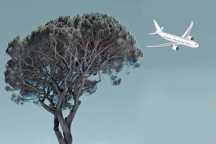 Teaserbild, Baum mit Flugzeug