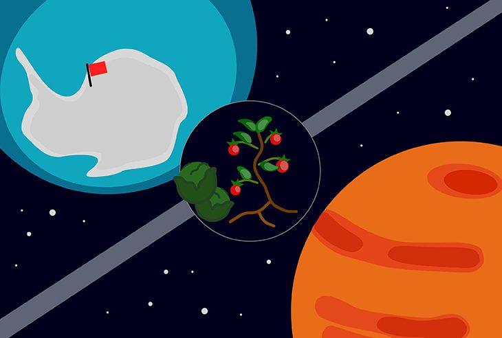 Gemüse im All zwischen Südpol und Mars