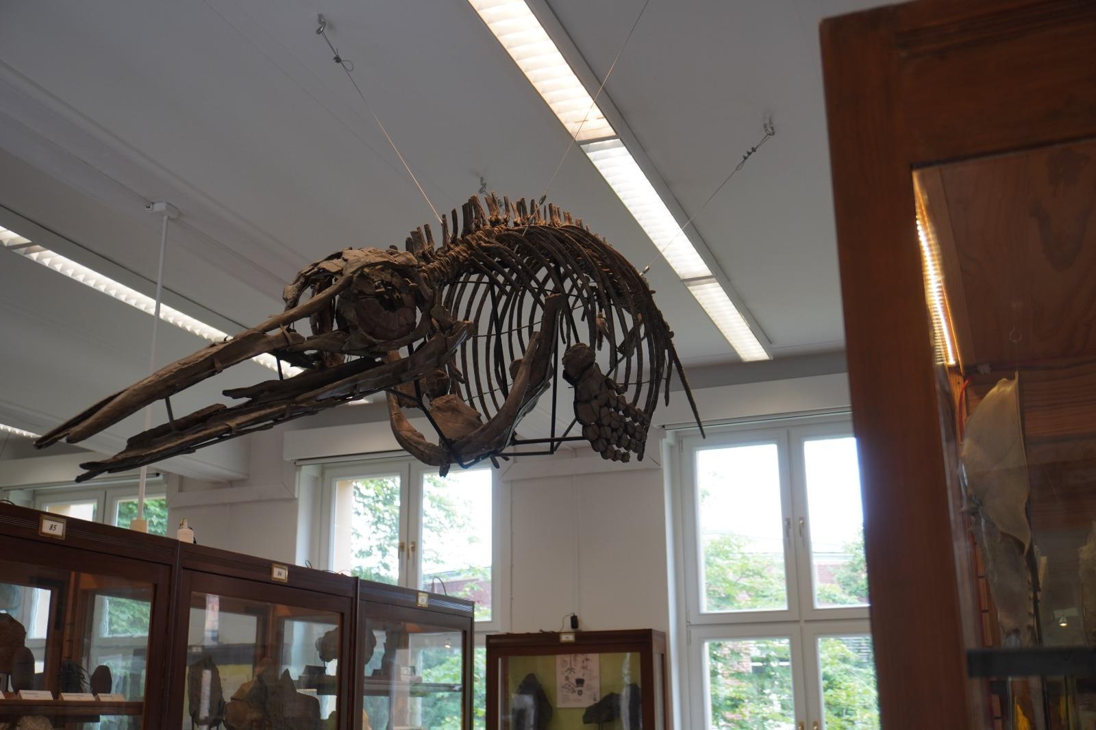 Fossilnachbildung eines Meeresdinosauriers